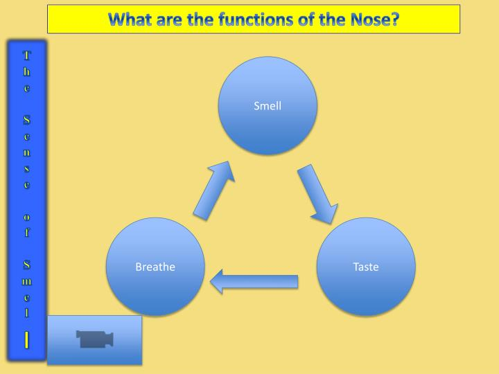 What are the functions of the Nose?