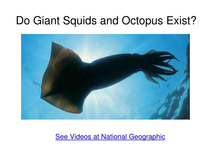 Do Giant Squids and Octopus Exist?