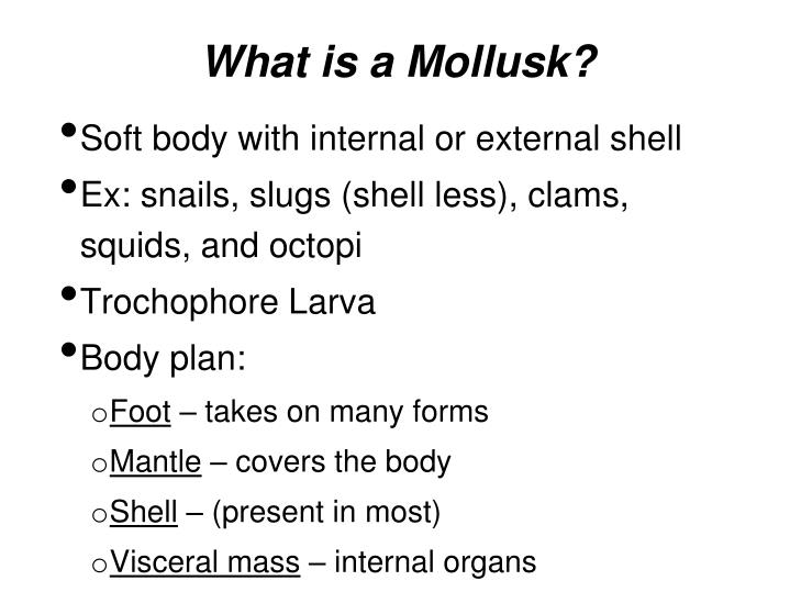 What is a Mollusk?
