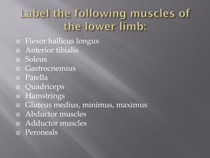 Label the following muscles of the lower limb:
