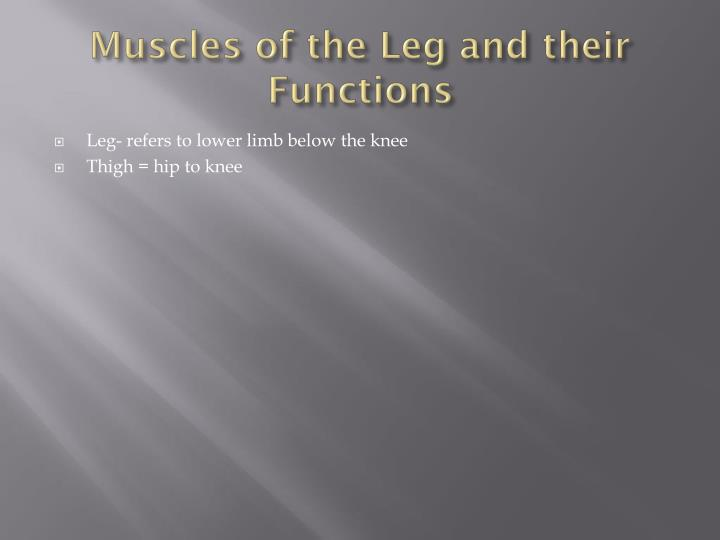 Muscles of the Leg and their Functions