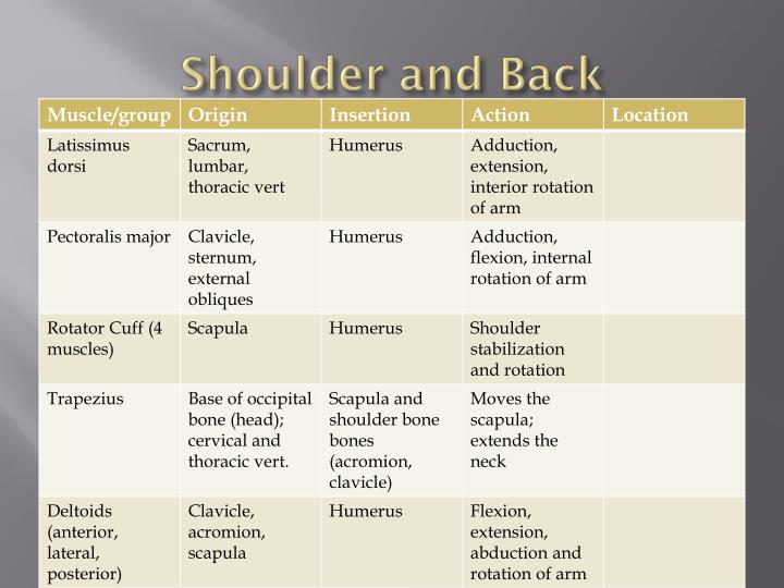 Shoulder and Back