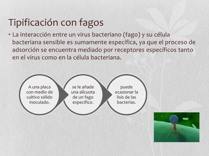 Tipificación con fagos