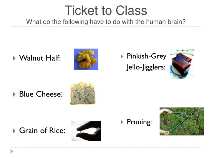 Ticket to class what do the following have to do with the human brain