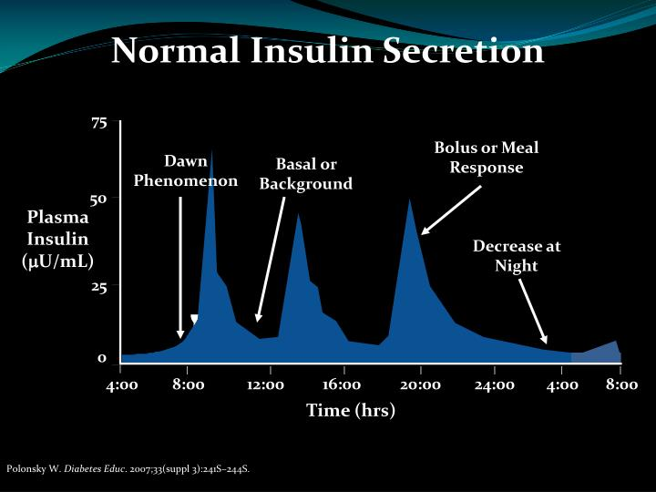 Normal Insulin Secretion