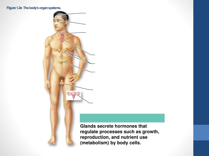 Figure 1.2eThe body's organ systems.