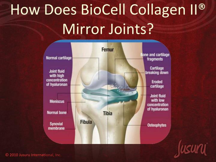 How Does BioCell Collagen II