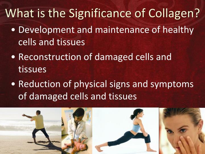 What is the Significance of Collagen?