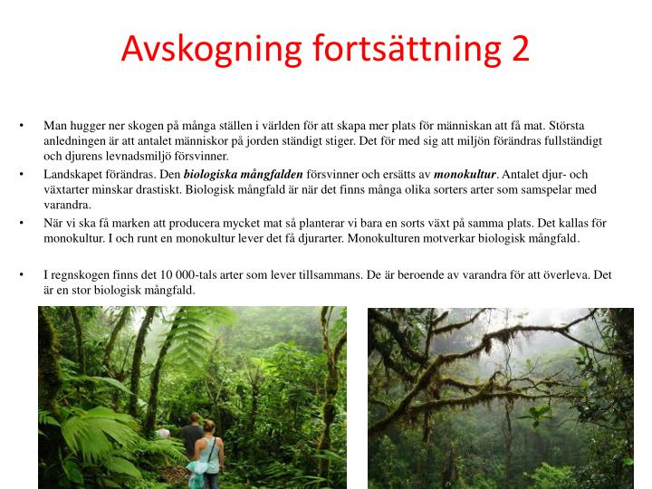 Avskogning