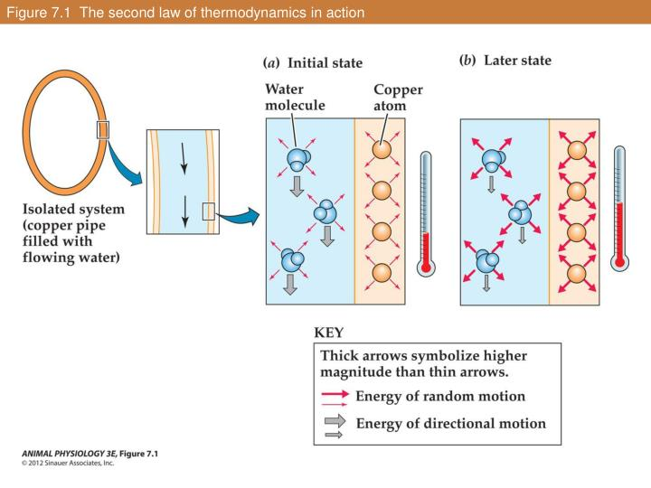 Figure 7 1 the second law of thermodynamics in action1