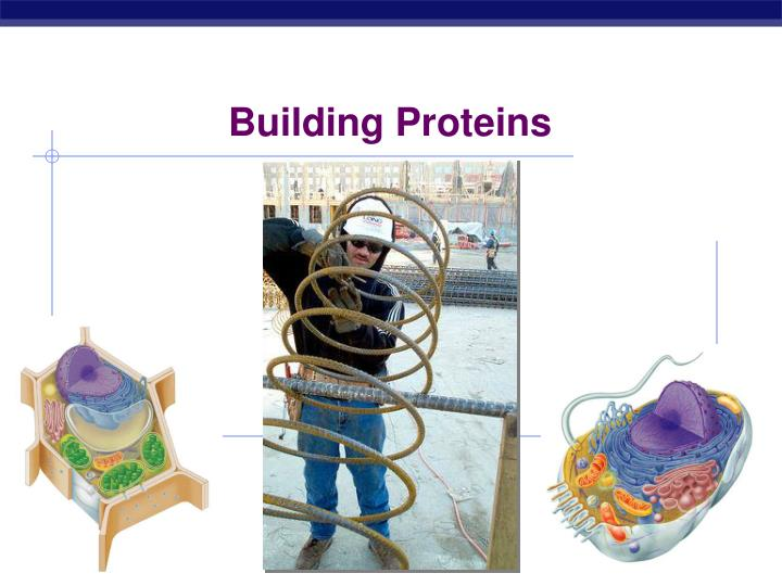 Building Proteins