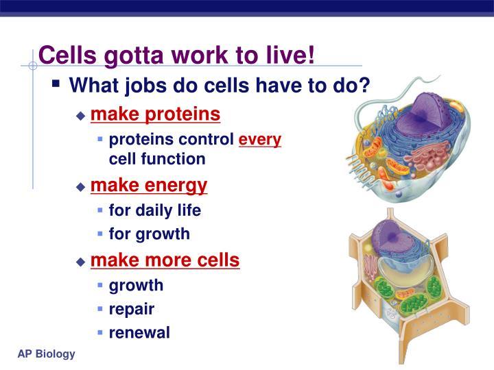 Cells gotta work to live!