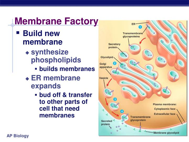 Membrane Factory