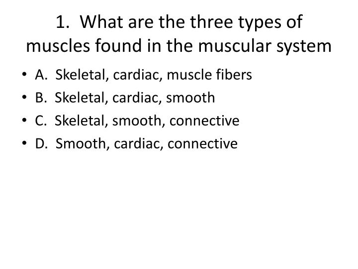1 what are the three types of muscles found in the muscular system