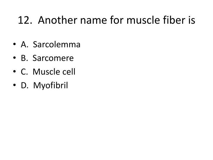 12.  Another name for muscle fiber is