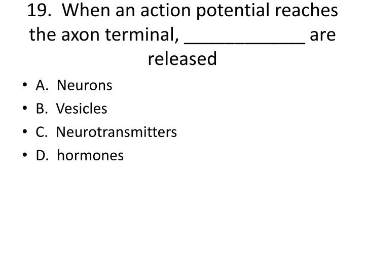 19.  When an action potential reaches the axon terminal, ____________ are released