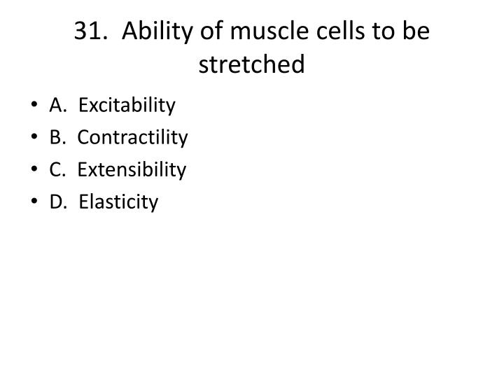 31.  Ability of muscle cells to be stretched