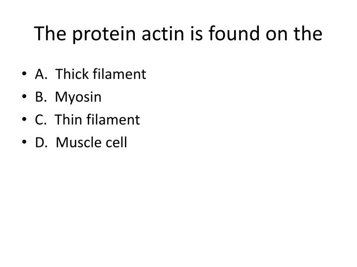 The protein actin is found on the