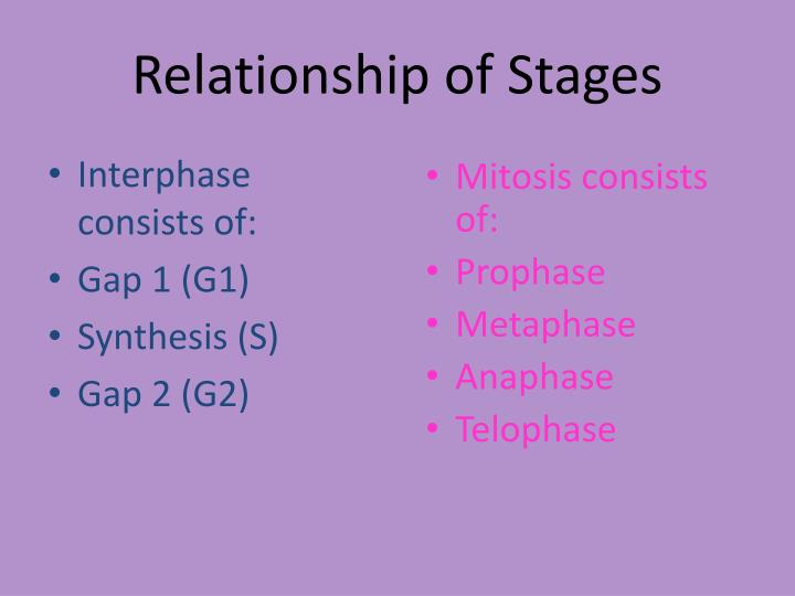 Interphase consists of: