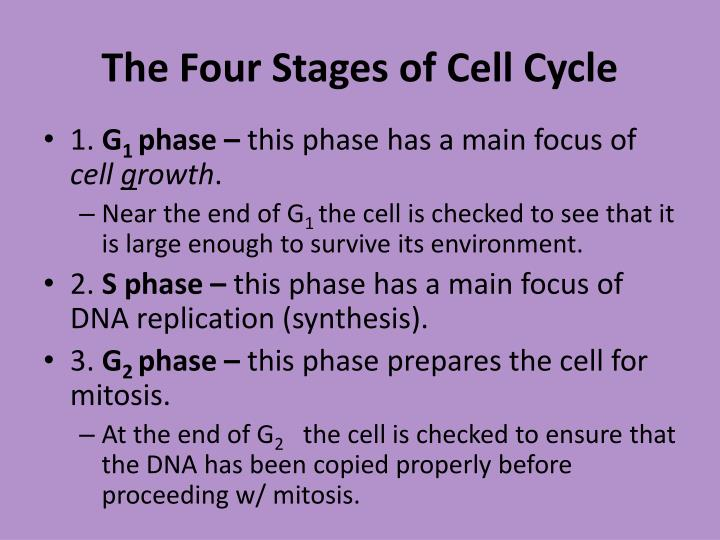 The Four Stages of Cell Cycle