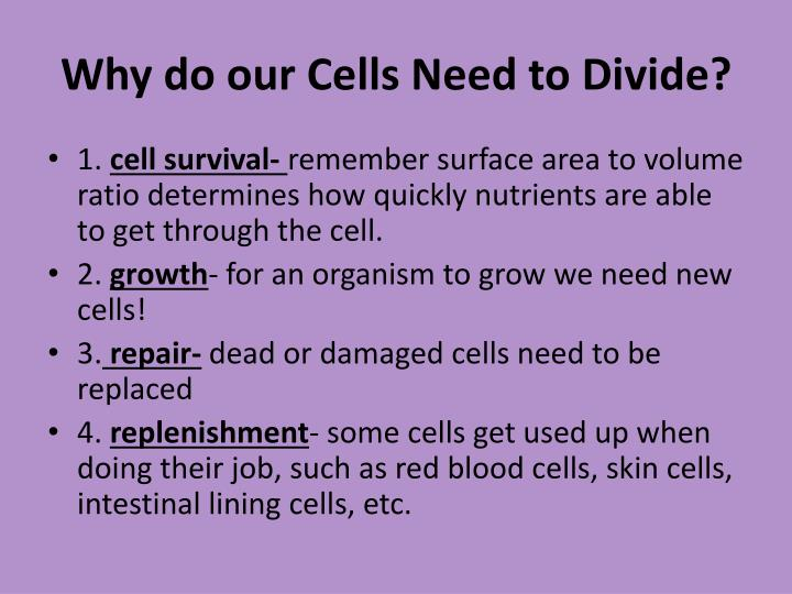 Why do our cells need to divide