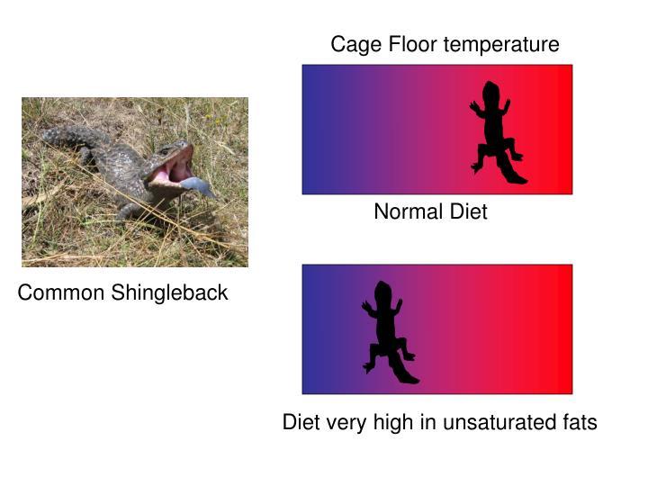 Cage Floor temperature