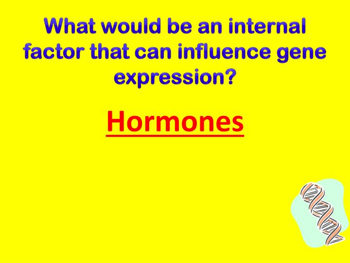 What would be an internal factor that can influence gene expression?