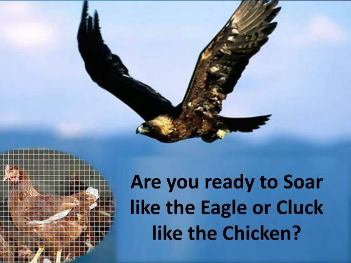 Are you ready to Soar like the Eagle or Cluck like the Chicken?