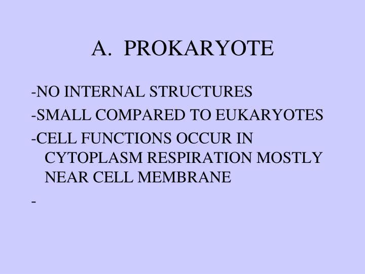 A.  PROKARYOTE