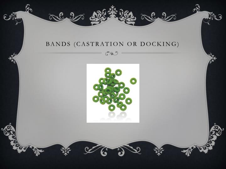 Bands (castration or docking)