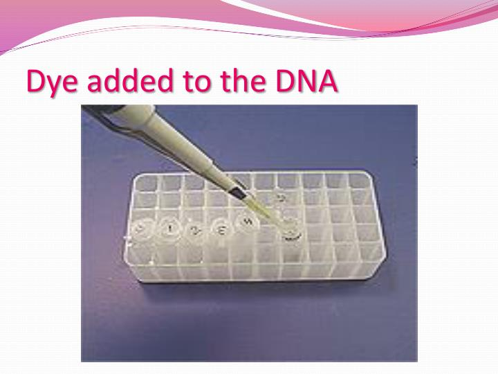 Dye added to the DNA