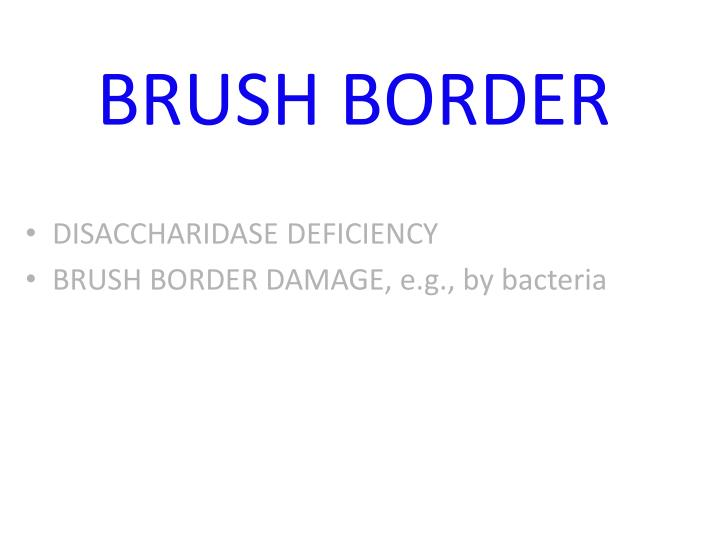 BRUSH BORDER