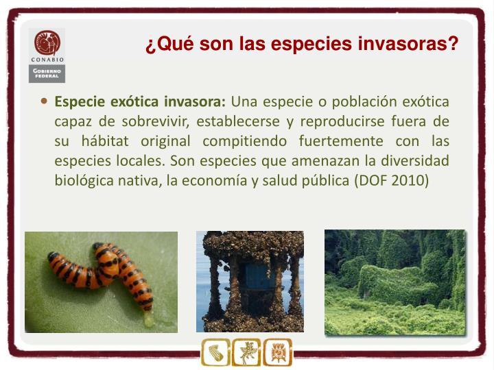 ¿Qué son las especies invasoras?