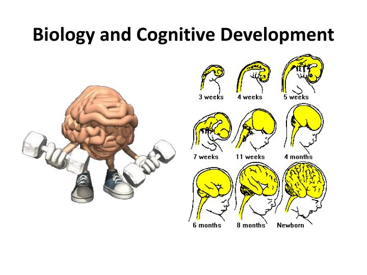 Biology and Cognitive Development