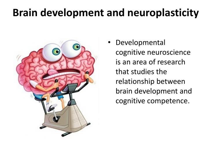 Brain development and