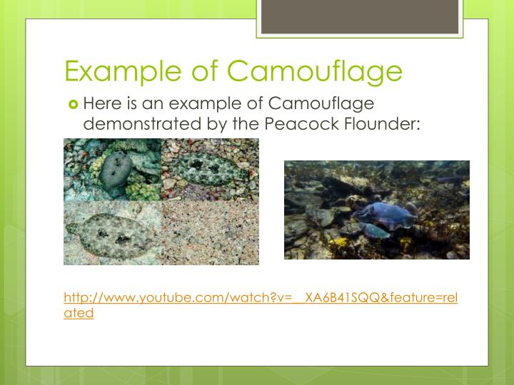 Example of Camouflage