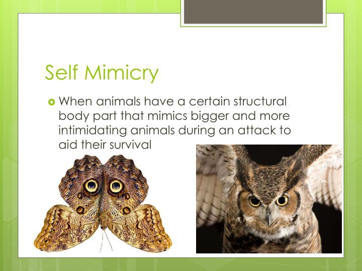 Self Mimicry