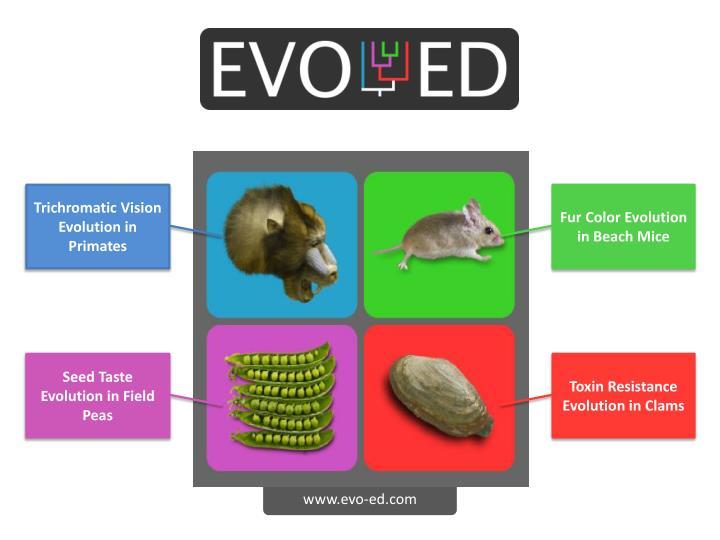 Trichromatic Vision Evolution in Primates