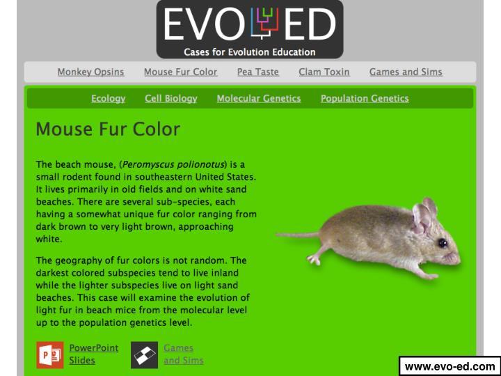www.evo-ed.com