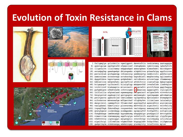 Evolution of Toxin Resistance in Clams