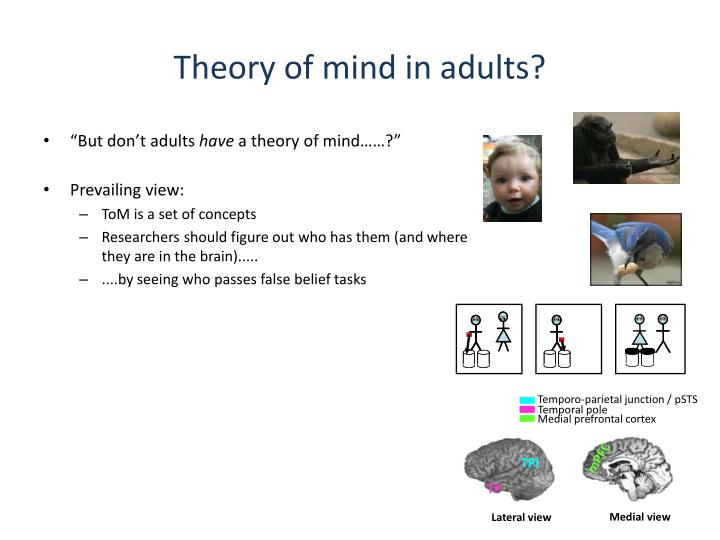 Theory of mind in adults?