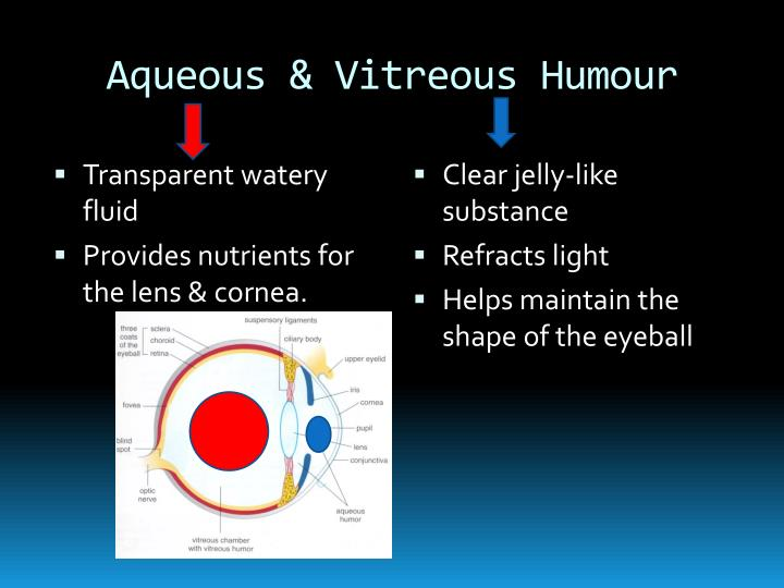 Aqueous & Vitreous