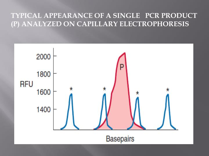 TYPICAL APPEARANCE OF A SINGLE   PCR PRODUCT (P) ANALYZED ON CAPILLARY ELECTROPHORESIS