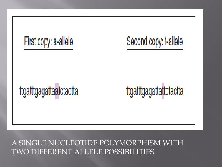 A SINGLE NUCLEOTIDE POLYMORPHISM WITH TWO DIFFERENT ALLELE POSSIBILITIES.
