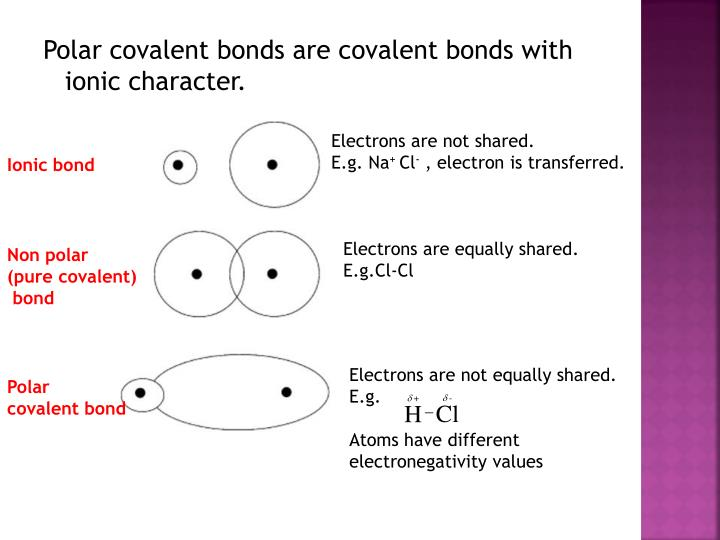 Electrons are not shared.