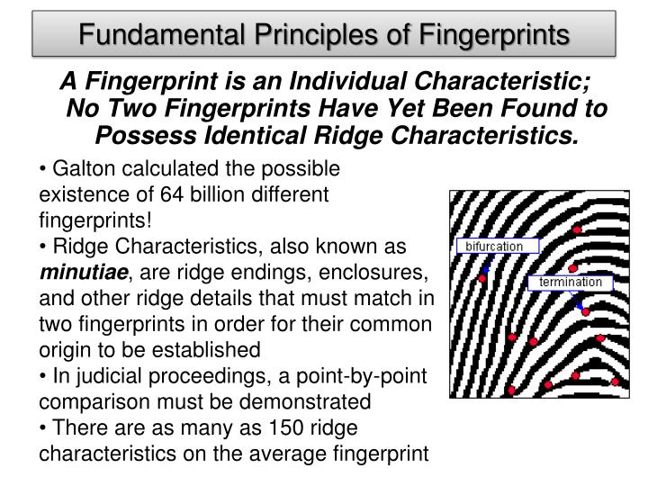 Fundamental Principles of Fingerprints