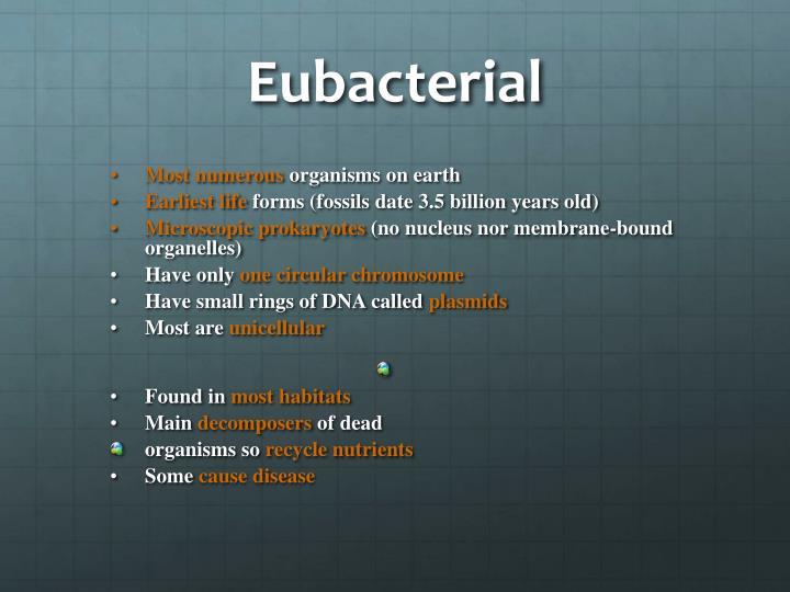 Eubacterial