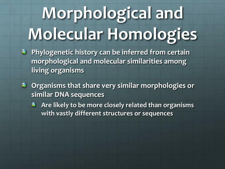 Morphological and Molecular Homologies