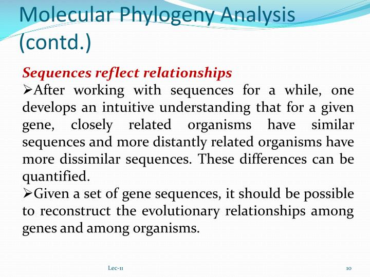 Molecular Phylogeny Analysis (contd.)