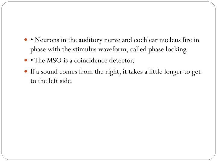 • Neurons in the auditory nerve and cochlear nucleus fire in phase with the stimulus waveform, called phase locking.